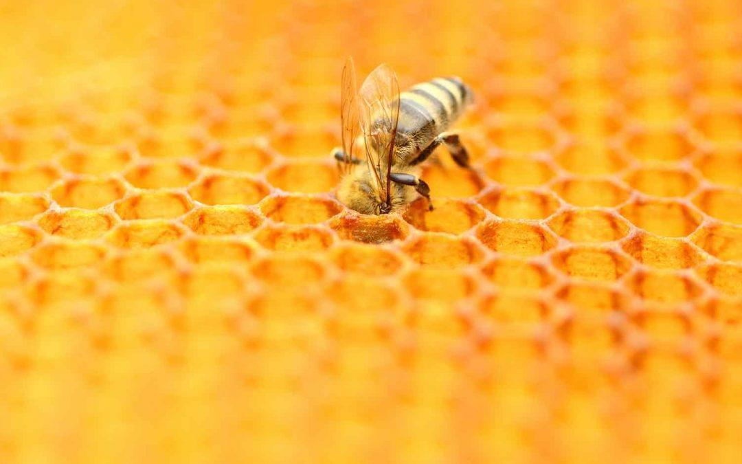 Honeyscribe Beelines Project